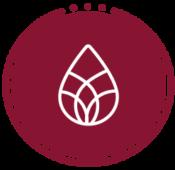Logo_sk_250x240